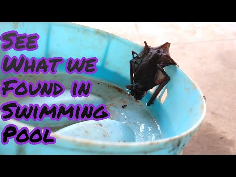 Look what we found in swimming pool | My new pet ? Save Animals | Swimming Time