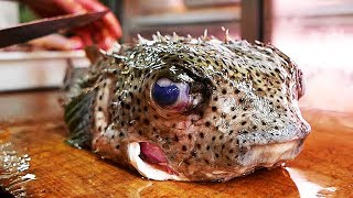 Japanese Street Food - PORCUPINE FISH Sashimi Japan