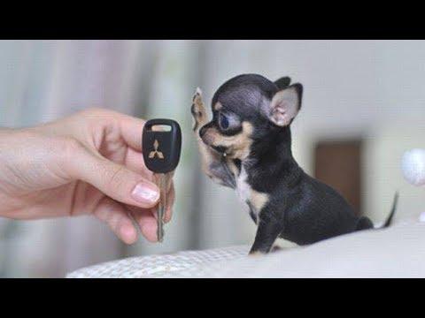 Вопрос: Маленькая собака или большая Какую выбрать?