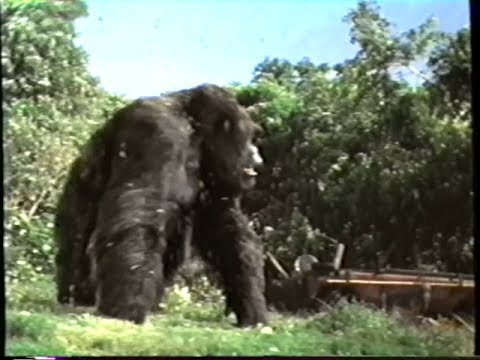 Image Result For Mighty Joe Young