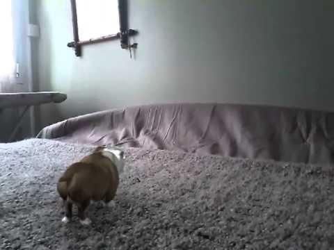 mon chien fait pipi sur mon lit - youtube