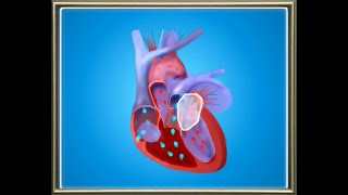 Science: Biology: Circulatory System: The organ systems in Human body