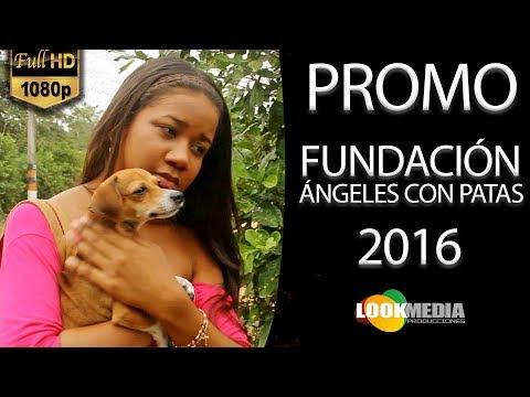 Fundación Ángeles con patas, Cartagena de Indias l Promo