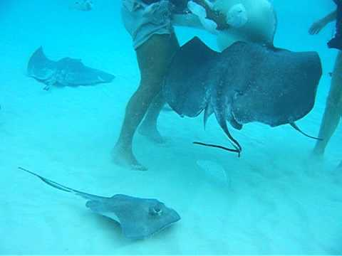 Outrage Ecotours Stingray City Tour, Grand Cayman