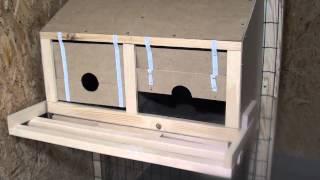видео Как сделать гнездо утки или ящик своими руками: размеры, чертежи