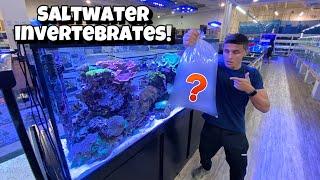 buying-new-invertebrates-for-my-aquarium