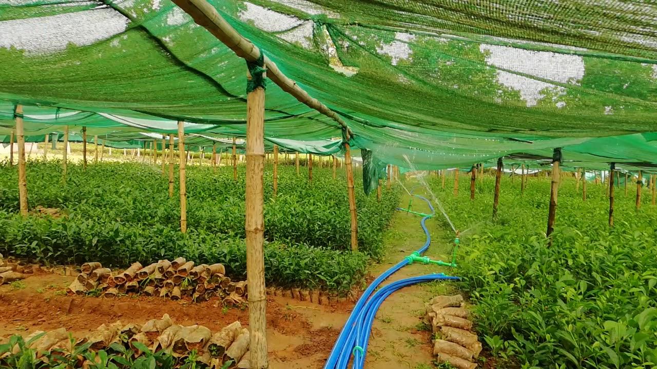 Sprinkler Drive Irrigation System