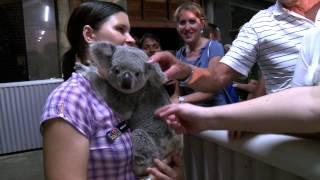 Cairns Night Zoo 15 sec TVC