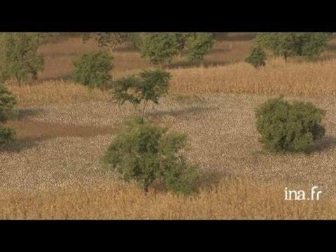 Burkina Faso : culture du coton à Banfora