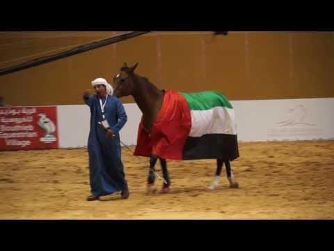 Ali Al Ameri Abu Dhabi Sep 2013