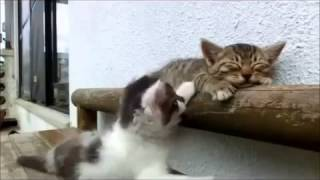 Котенок пытается разбудить своего брата