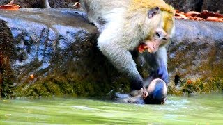 Why monkey fight little monkey in water like this? Why monkey not allow small monkey swim in pool
