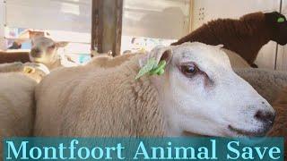 Montfoort Animal Save