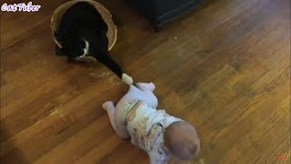Funny And Crazy cat videos By CatTuber