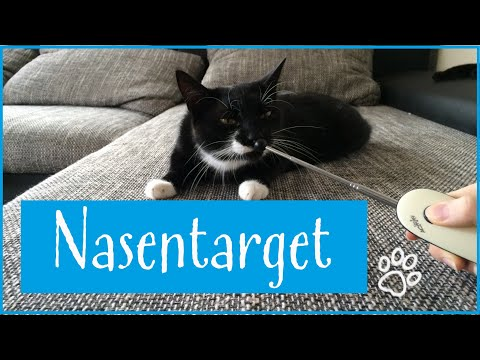 Nasentarget: Clickertraining mit Katzen