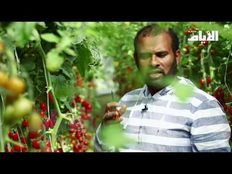 مزرعة بحرينية تتيح للزوار قطف المحاصيل  - نشر قبل 5 ساعة