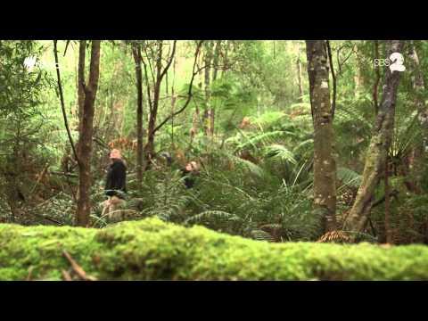 Tasmania's Ghost Town