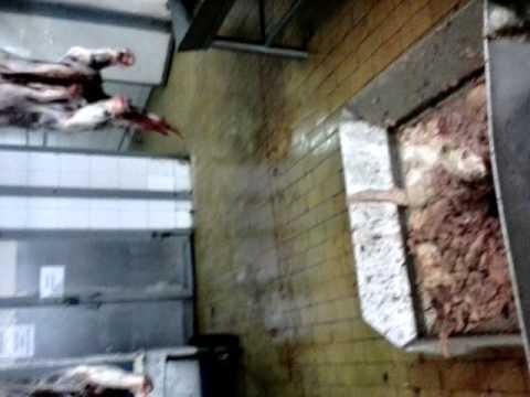 Беспредел на Черкизовском мясоперерабатывающем заводе Пенза  Прямое обсеменение туш патогенной микро