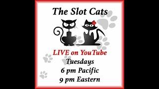 Taco Cat Tuesday Livestream: 01/15/2019