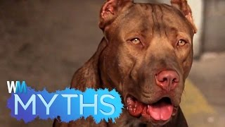 Pit Bull Attacks: 5 Myths