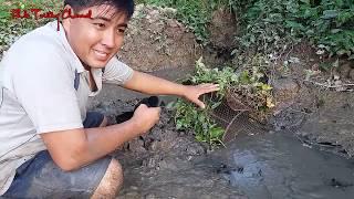 Mới đặt xuống mà cá đã vô lờ nhảy thấy mà ham| Catch fish in Viet Nam countryside