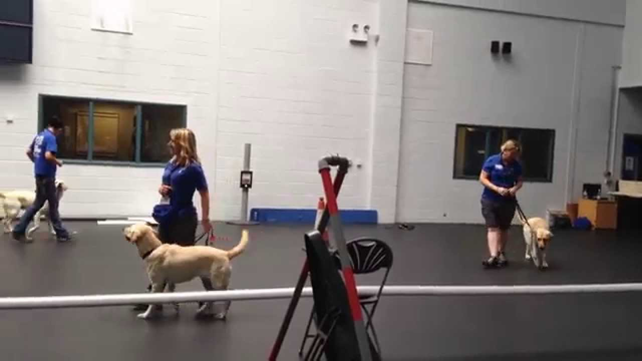 Guide Dog Training Blogs