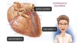 Y nombres de del corazon venas arterias