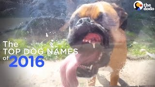 The Top 10 Dog Names Of 2016
