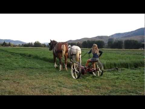 Mowing Hay With Horses