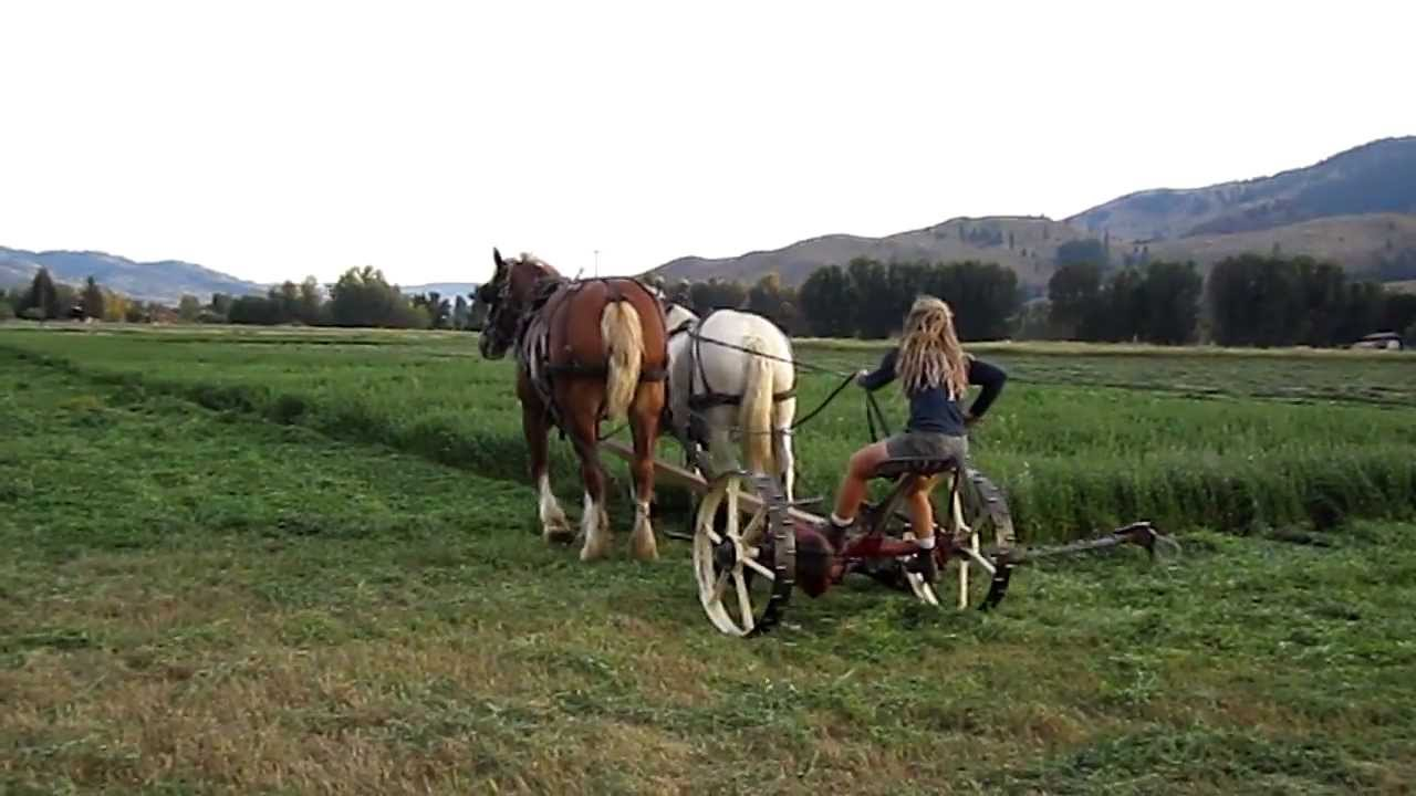 Mowing Hay With Horses Youtube