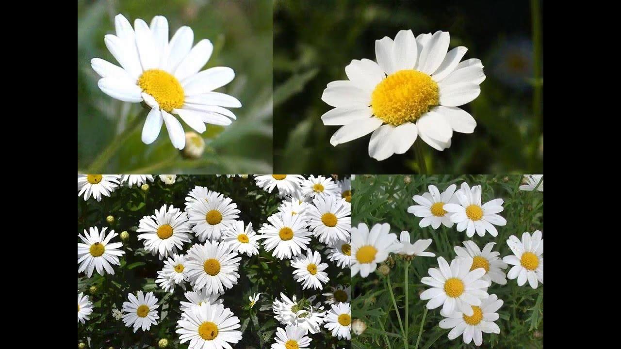 las flores m s comunes videos para ni os material