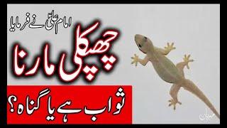 Chipkali Marna Gunah hai ya Sawab    Hazrat Imam Mola Ali as    lizard    Mehrban Ali TV