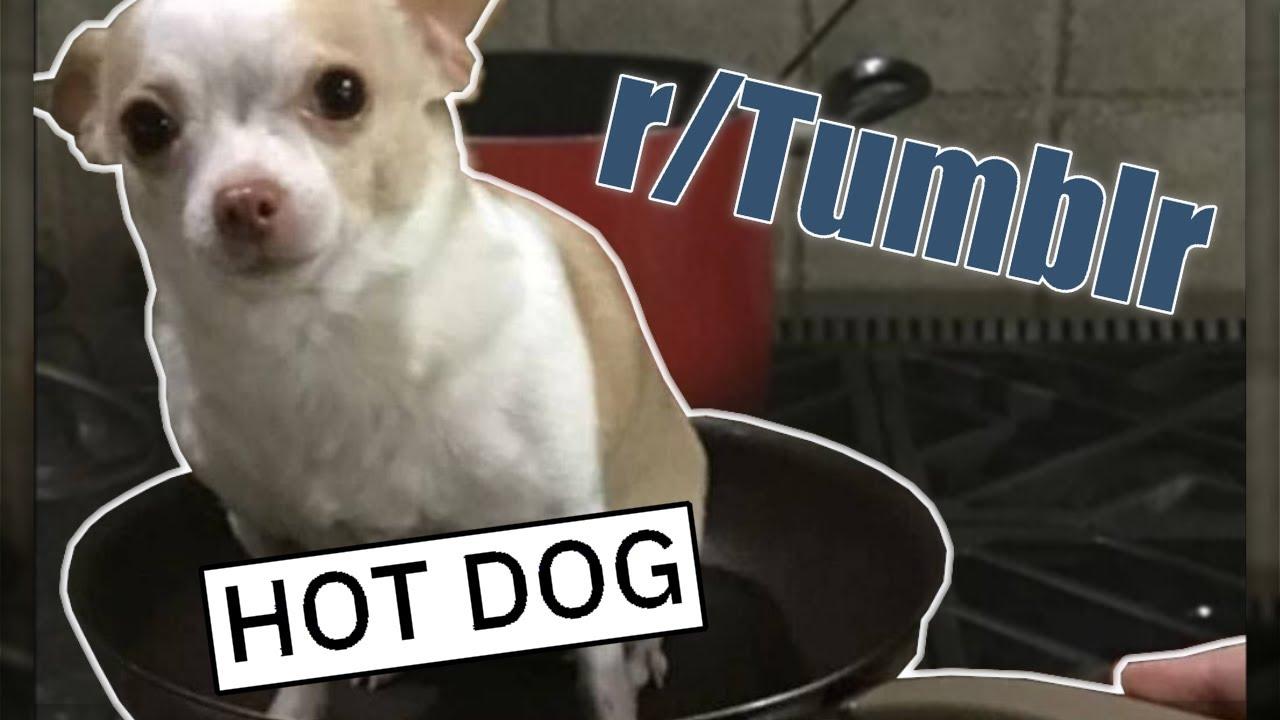 r/Tumblr | HOT DIGGITY DOG