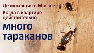 Очень много тараканов в квартире. Не допускайте у себя такого!