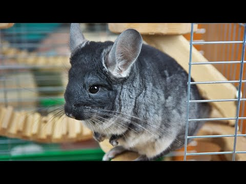 Top 10 Weirdly Cute Pets You Should Own Youtube