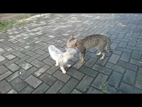 Cat Fight in Slow Motion