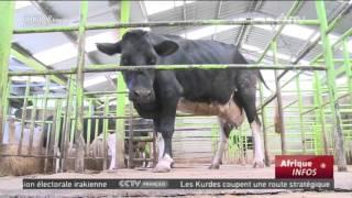 Un agriculteur kényan parie sur la télévision pour améliorer le rendement