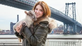 Cute Pet Lamb Lives In New York City Apartment