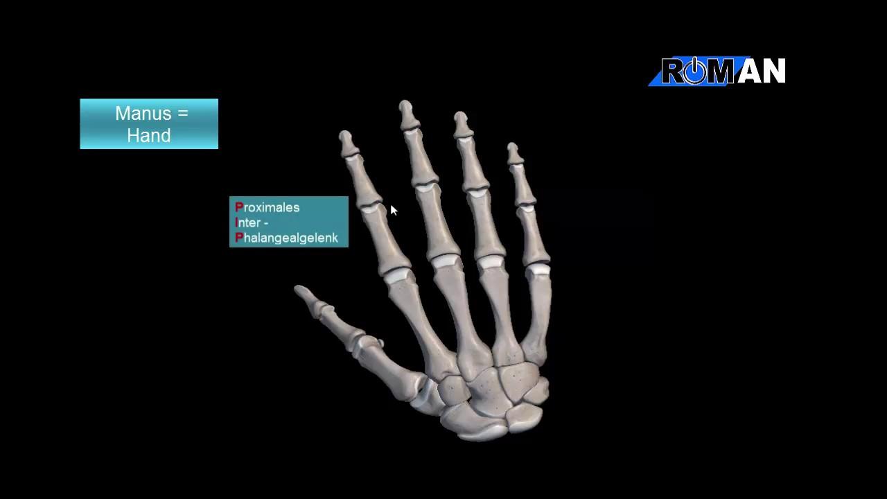 Die Knochen der Hand - YouTube