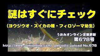 生配信中の疑問解消編【釣り場の水中映像 定期更新No.678】