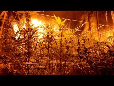 "Let's Talk Plant Biology with Kayla Kalix ""2"""