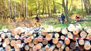видео Снос деревьев любой сложности в Москве и МО