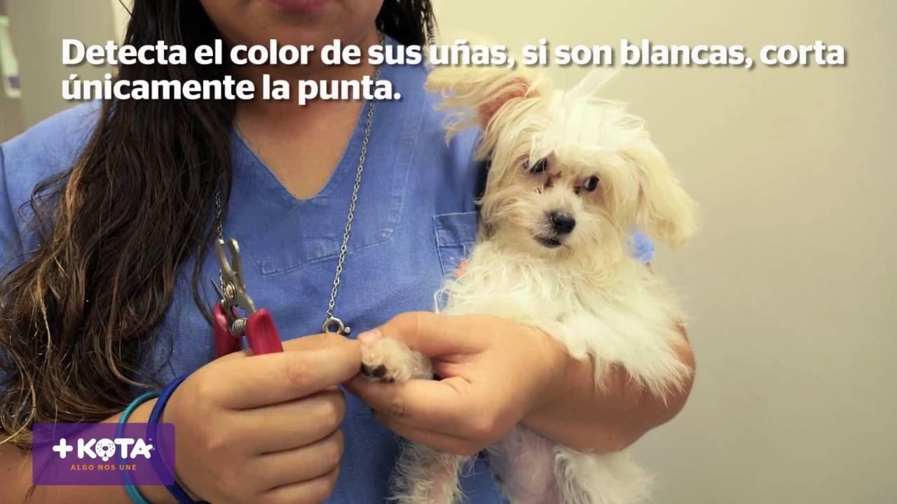 +KOTA te enseña a cortar correctamente las uñas de tu perro