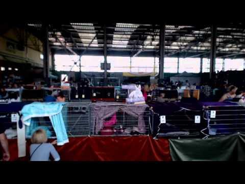 7.06.2014 - International Cat Show WCF - Radom, Poland - archive FelineWorld.eu
