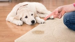 Home Remedies for Dog Urine on Furniture