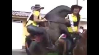 Конь завалил девушку