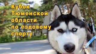 Кубок Тюменской области по ездовому спорту