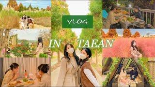 [국내여행 vlog #3]|태안여행 브이로그| 간호대학…