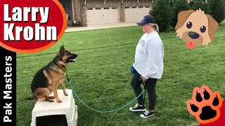 Reactive German Shepherd E collar training  Second training session