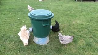 Mangeoire économique pour poules
